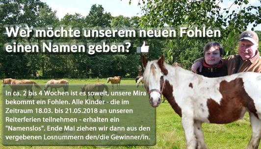 Reiterhof Lünzen - Reiterferien, Reiten, Pferde, Urlaub, Lüneburger Heide - Verlosung