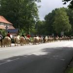 reiterhof-luenzen-ausritte-6