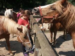 Bildergalerie - Unsere Pferde
