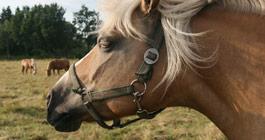 reiterhof-luenzen-reiten-pferdekopf Google+, Twitter und Facebook wurden aktualisiert