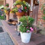 Reiterhof-Luenzen-Juli-2014 (3)