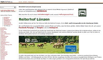 Reiterhof Luenzen bei Tier-Fotos.eu