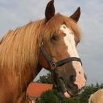Reiten - Pferde